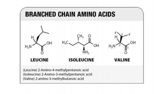4 причини да използвате BCAA Аминокиселини разклонена верига