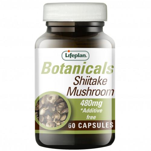 Shiitake Mushroom / Шийтаке 1