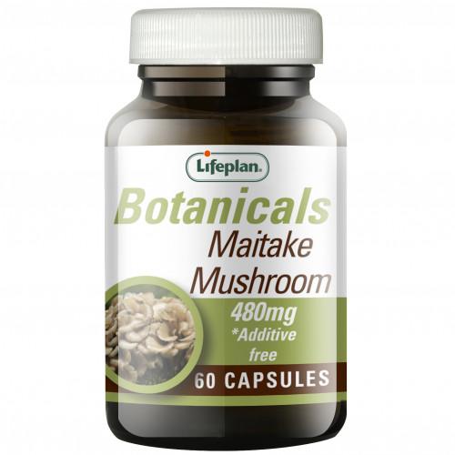 Maitake Mushroom 1