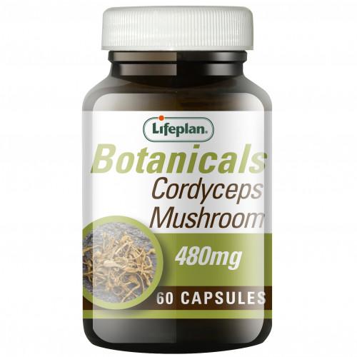 Cordyceps Mushroom / Кордицепс 1